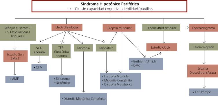 distrofia muscular de la extremidad diabetes tipo 1b