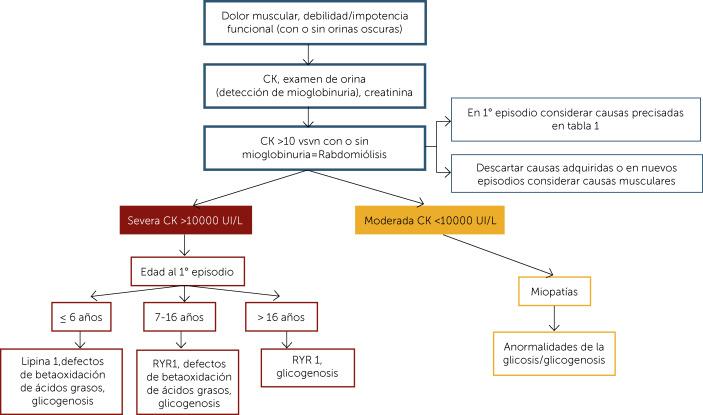 ciclo de dolor de riñón 1