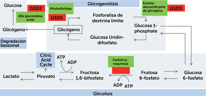 distrofia muscular de la extremidad síntomas de diabetes tipo 2