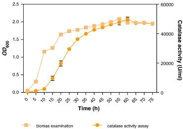a case study catalase activity