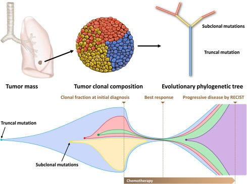 Radiomics And Its Emerging Role In Lung Cancer Research Imaging