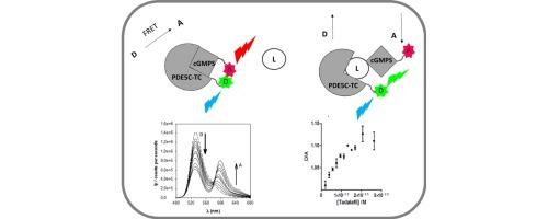 蛋白质 - 配体配合的荧光检测:phosphodiesterase5的情况下