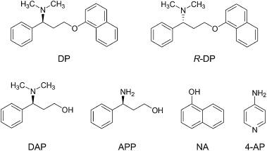 prednisone uses for humans