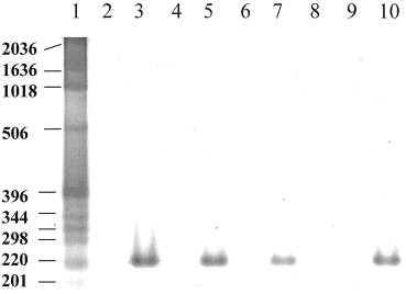 Rapid detection of the mecA gene in methicillin resistant