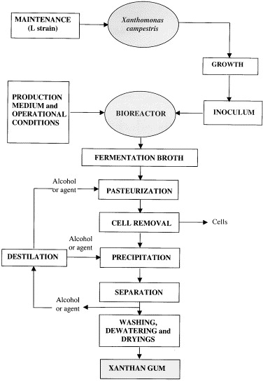 Xanthan gum: production, recovery, and properties - ScienceDirect | Xanthan Gum Process Flow Diagram |  | ScienceDirect