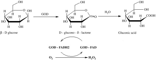 Glucose oxidase — An overview ...