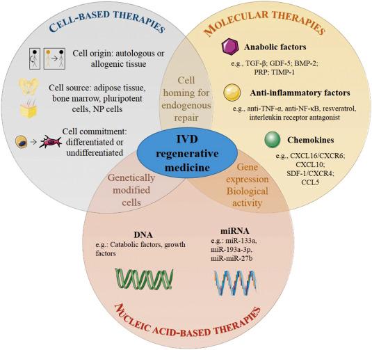 Innovative strategies for intervertebral disc regenerative medicine cell based therapies ccuart Gallery
