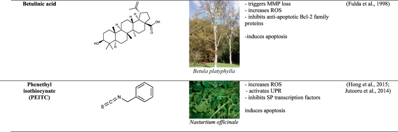Natural scaffolds in anticancer therapy and precision