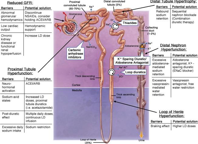 lasix mechanism of action