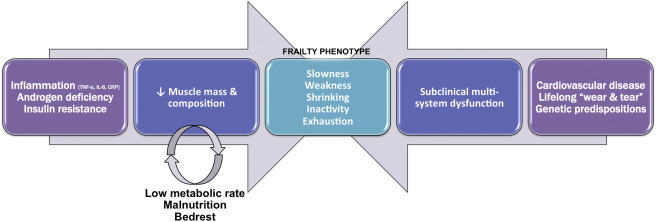 Frailty Assessment in the Cardiovascular Care of Older Adults ...