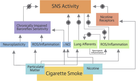 Adverse Effects of Cigarette and Noncigarette Smoke Exposure on the