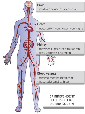 Dietary Sodium and Health: More Than Just Blood Pressure - ScienceDirect