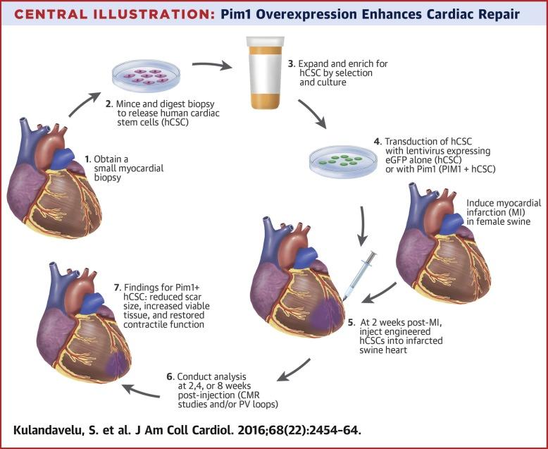 Pim1 Kinase Overexpression Enhances Ckit Cardiac Stem Cell Cardiac