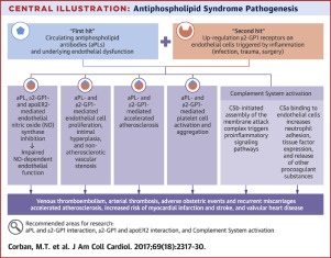 Antiphospholipid Syndrome Role Of Vascular Endothelial Cells And
