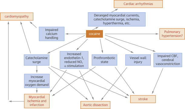The Cardiovascular Effects of Cocaine - ScienceDirect