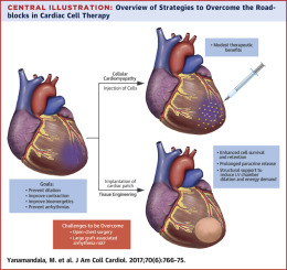 Overcoming The Roadblocks To Cardiac Cell Therapy Using Tissue