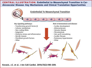 Endothelial to Mesenchymal Transition in Cardiovascular