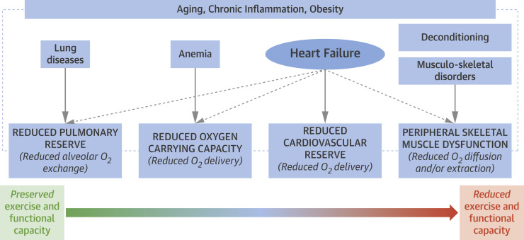 Exercise Intolerance in Patients With Heart Failure: JACC