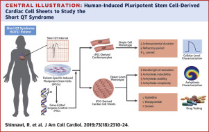 Modeling Reentry in the Short QT Syndrome With Human-Induced