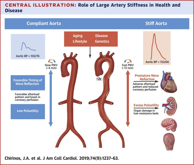 Large-Artery Stiffness in Health and Disease: JACC State-of-the-Art Review  - ScienceDirect