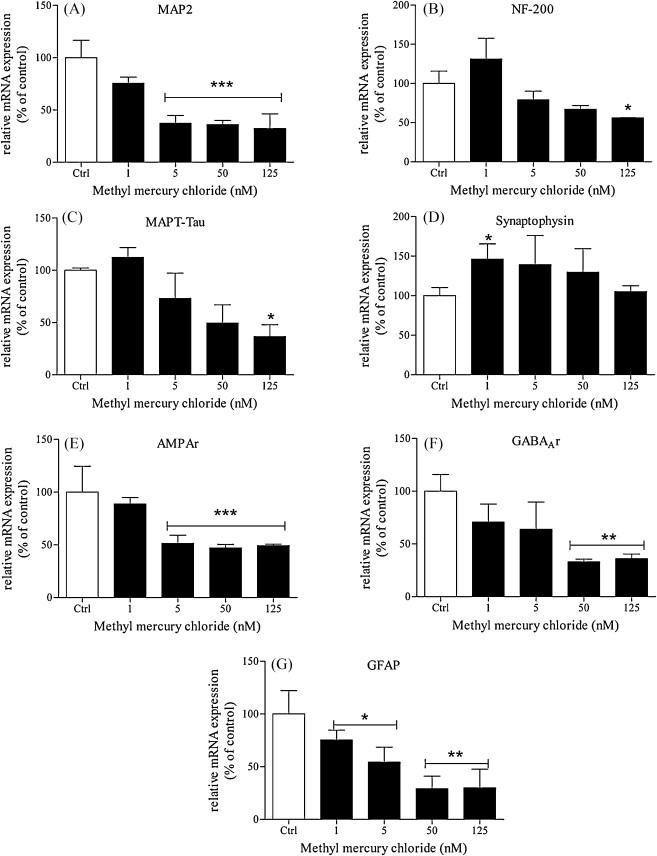 A human pluripotent carcinoma stem cell-based model for in vitro