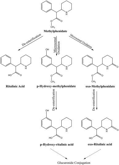 Methylphenidate effects in the young brain: friend or foe
