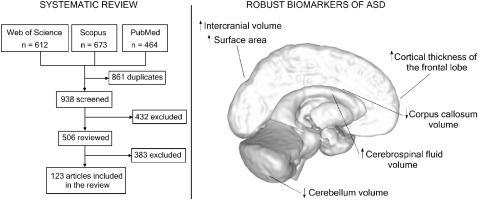 In Autism Brain Shows Unusual Thinning >> A Systematic Review Of Structural Mri Biomarkers In Autism