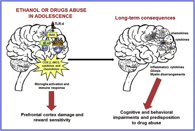 Impact of neuroimmune activation induced by alcohol or drug