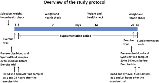 Effects of a Novel Dietary Supplement on Indices of Muscle