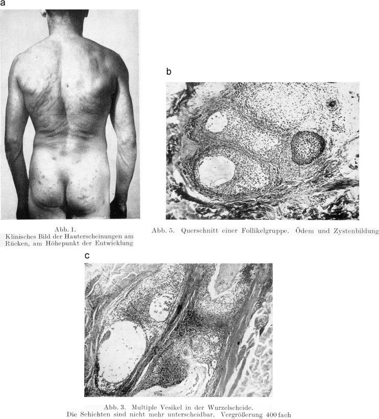 Ungewöhnlich Weibliche Anatomie Reale Abbildungen Ideen - Anatomie ...