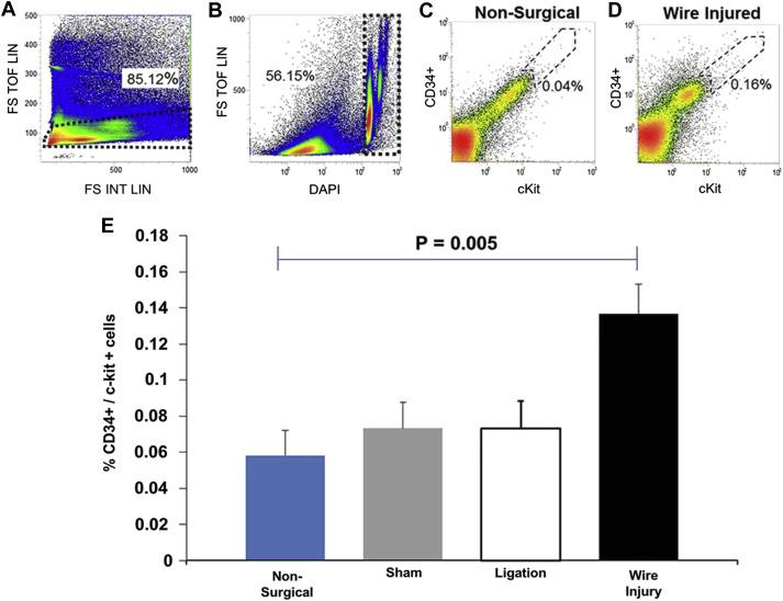 A depleting antibody toward sca-1 mitigates a surge of CD34