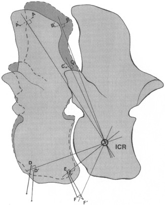 Spinal Biomechanics And Functional Anatomy