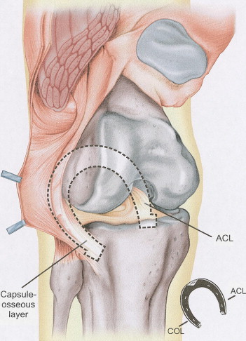 An Anatomic Study of the Iliotibial Tract - ScienceDirect