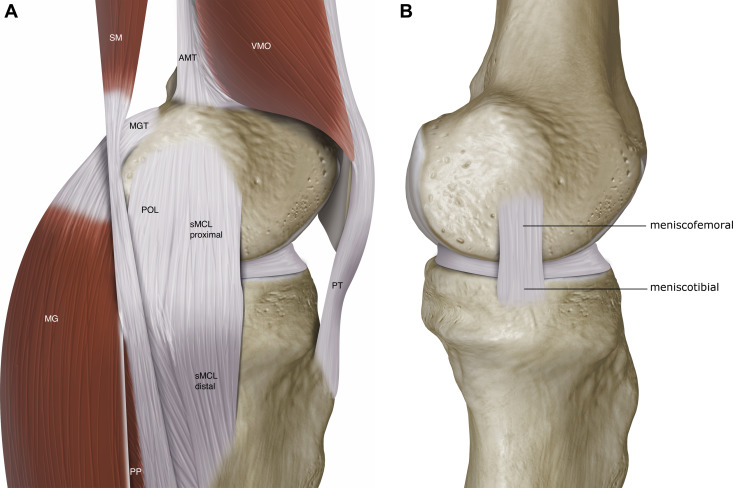 Surgical Repair Of Medial Collateral Ligament And Posteromedial
