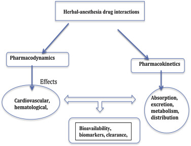 Phyto-anesthetics: A mini-review on herb–anesthesia drug