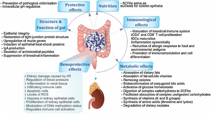 The Impact Of Gut Microbiota On Kidney Function And Pathogenesis