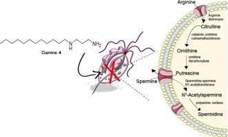 paraziták az anthurium levelein milyen paraziták táplálkoznak vasból