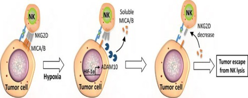 Immunotherapy for acute myeloid leukemia (AML): a potent