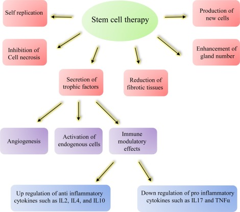 Stem cell therapy in Asherman syndrome and thin endometrium