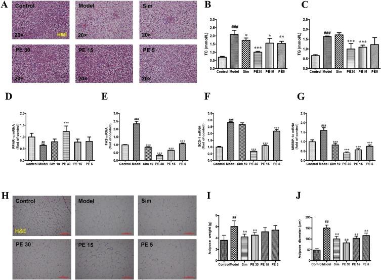 Pedunculoside, a novel triterpene saponin extracted from Ilex