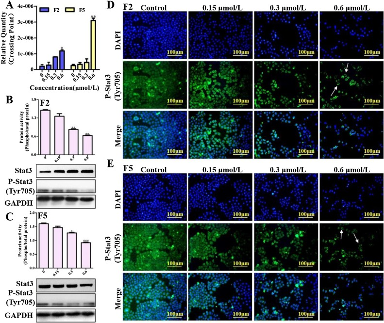 Novel compounds TAD-1822-7-F2 and F5 inhibited HeLa cells growth