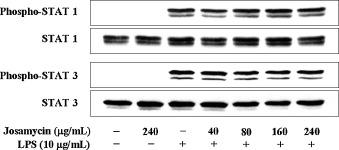 Josamycin suppresses Prevotella intermedia