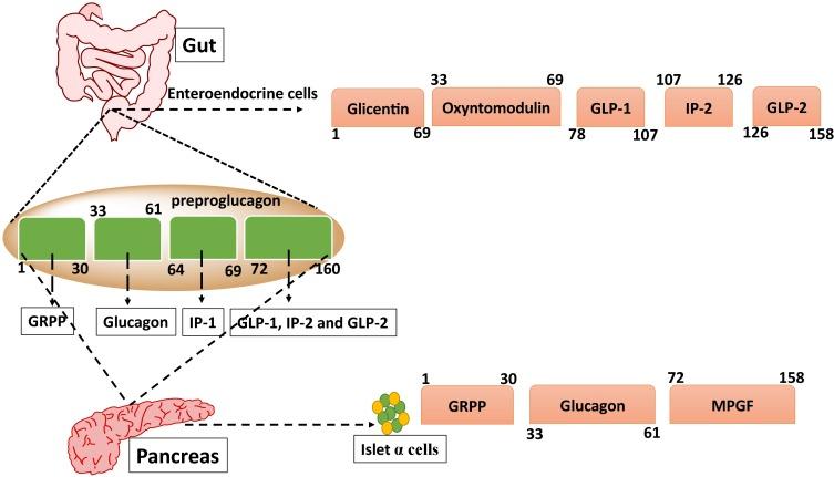 diabetes tmkoc gpl 1