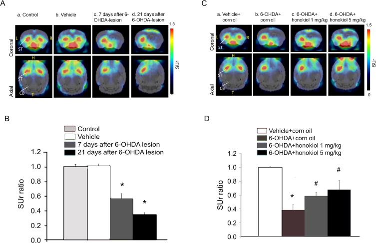 Therapeutic effects of honokiol on motor impairment in ...