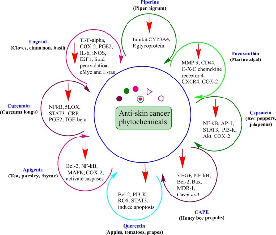 Potential Phytochemicals In The Fight Against Skin Cancer Current Landscape And Future Perspectives Sciencedirect