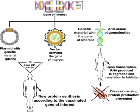 Gene Therapy And Type 1 Diabetes Mellitus Sciencedirect