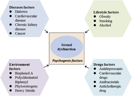 dysfunction sexual reviews drive for