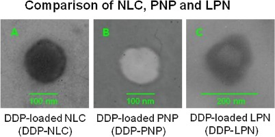 Ovarian carcinoma biological nanotherapy: Comparison of the