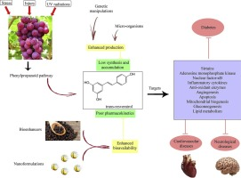 Resveratrol From Enhanced Biosynthesis And Bioavailability To