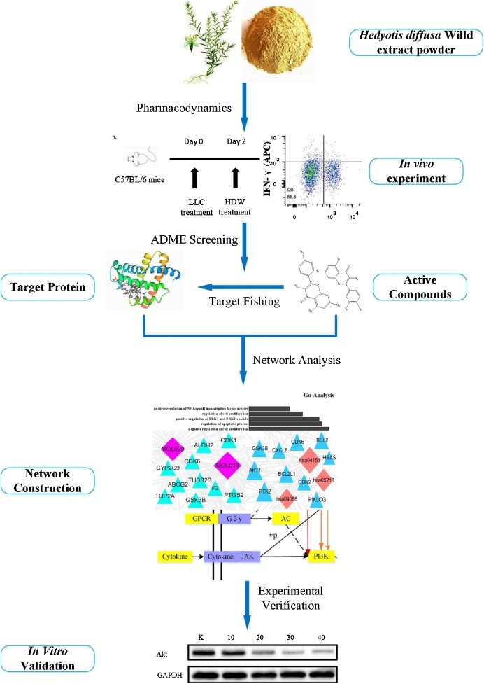 Systems pharmacology uncover the mechanism of anti-non-small